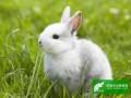 兔真菌性皮肤病的有效防治
