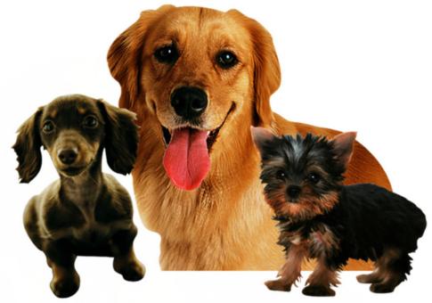 宠物皮肤病如何预防?