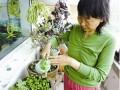 阳台种菜必备:各种蔬菜的种植时间表