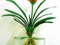 水培花卉如何施肥