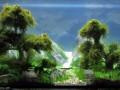 厥类植物与沉木的搭配