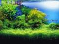 珊瑚礁缸的光照技巧