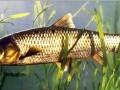 养鱼技术集锦