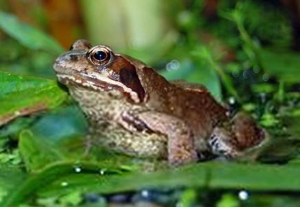 解决蛙类饲料