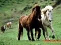 马的饲喂及饮水