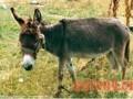 肉驴饮水要适时,慢饮而充足