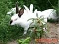 预防兔病应从三方面着手