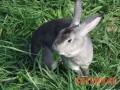 常用的几种兔饲料