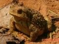 蟾蜍产卵池