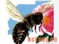 转地蜂群春季增长阶段的管理