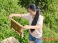 蜂巢内温、湿度调节