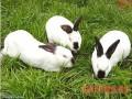 农户养兔八大误区