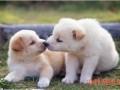 犬何偻病和骨软症