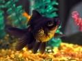 怎样让水草和金鱼相得益彰