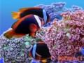 养鱼期间进行杀虫杀菌的方法及步骤
