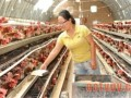 产蛋期间需要的营养特点