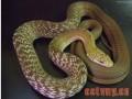 谈抗生素在蛇的病中的应用
