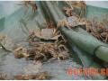 仔蟹的病害防治