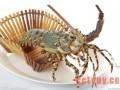 红彤彤的春天 明艳艳的龙虾