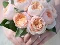 切花月季品种—十大奥斯汀切花