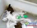 龟苗干养的技巧
