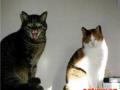 怎样让猫猫适应新的环境呢?