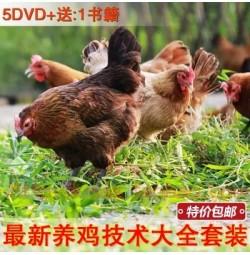 新生态科学散养肉鸡养殖光盘 5DVD+1书籍