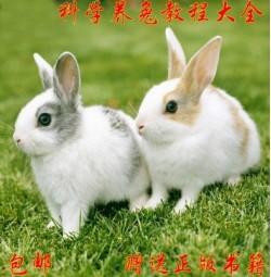 科学养兔技术视频教程大全