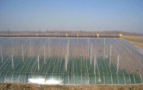 供应昌龙兴农膜,地膜,缠绕膜,大棚膜,农用地膜