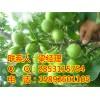 内江核桃苗,内江核桃苗挂果,内江核桃苗销售