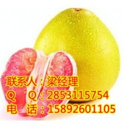铜梁柚子苗的价格,铜梁柚子苗的功效,铜梁红心蜜柚