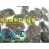 供应越南种石金钱龟